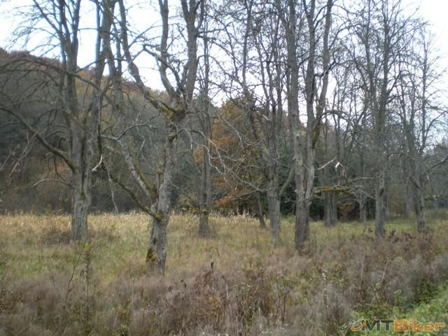 33.stare stromy ako z rozpravky.jpg