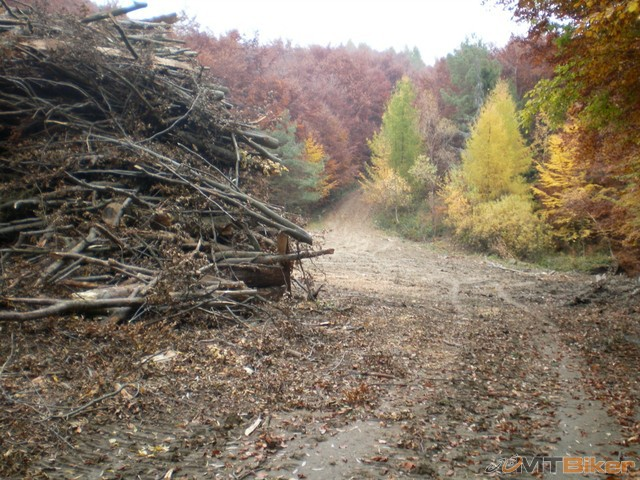 40.tocna za kopou krmelec..ja este skusim trochu..idem rovno a stupak cez les...jpg