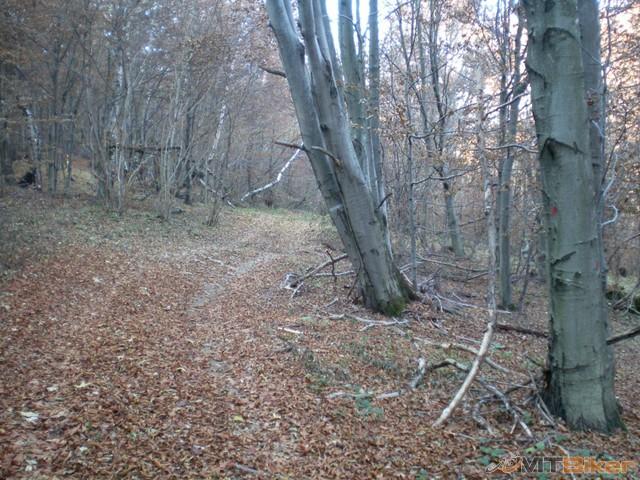 25.krizom cez les dole sme vysli na lesnu cestu a potom dolava...jpg