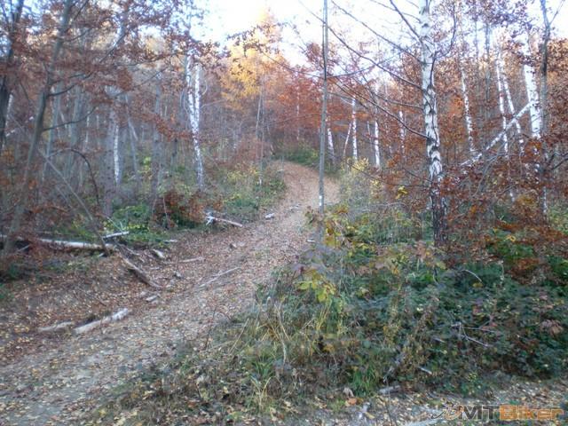 63.znacenie po lese biedne.jpg
