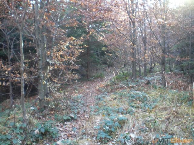 61.cez les do runiny.klusanie je tu prudke na listi sa smyka..plus vela volnych kamenov..tlak na kolena...jpg