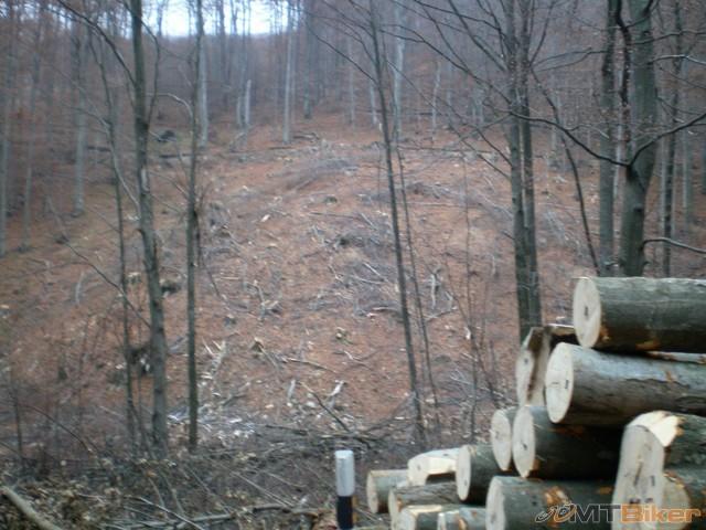 44.dve rubaniska vedla seba a kopa dreva popri ceste...jpg