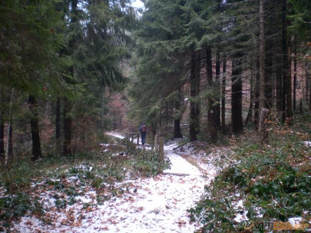 5.ihlicnate lesy mam rad....jpg