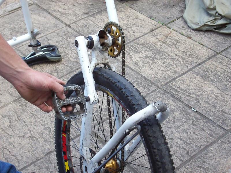 broken chameleon.jpg