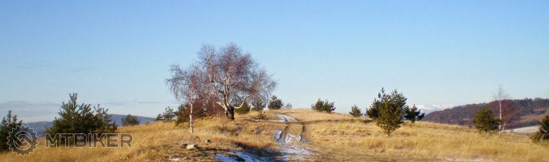 Breza na vrchu Jasenie (December 2011).jpg
