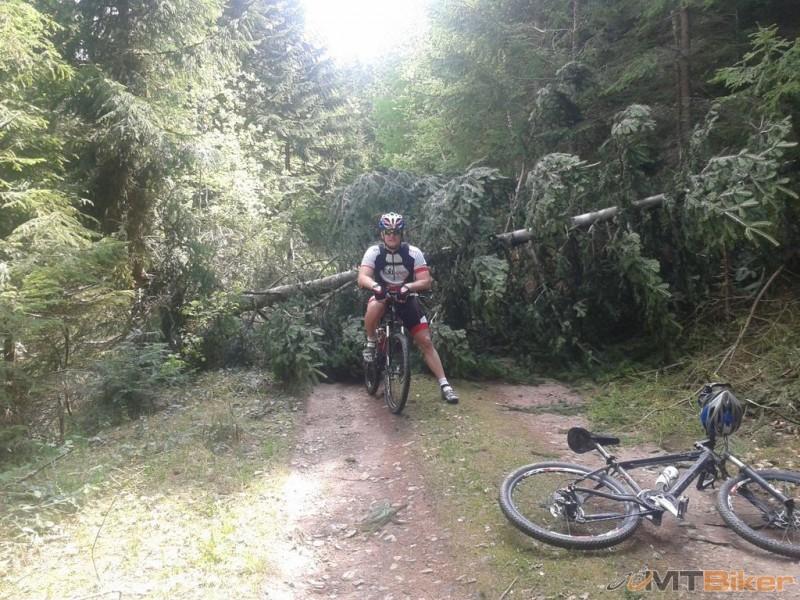 padnuty strom.jpg