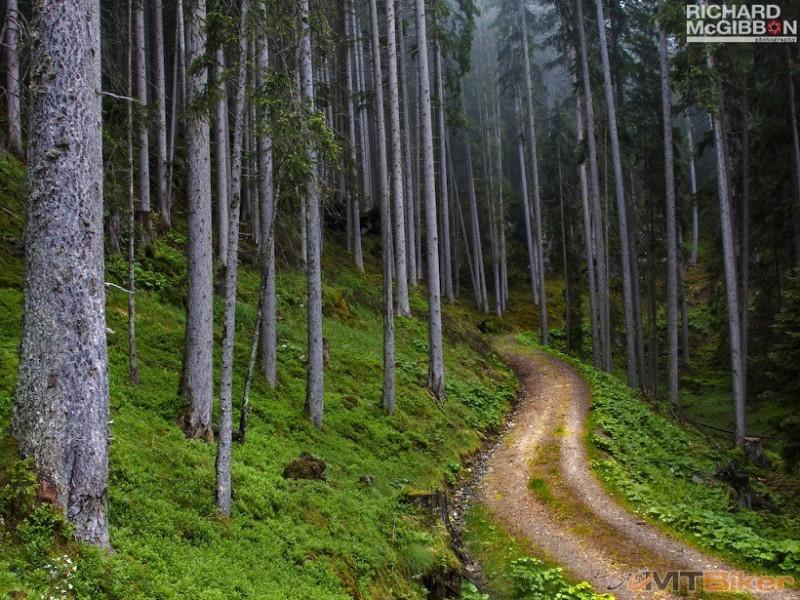 Forest_1024.jpg