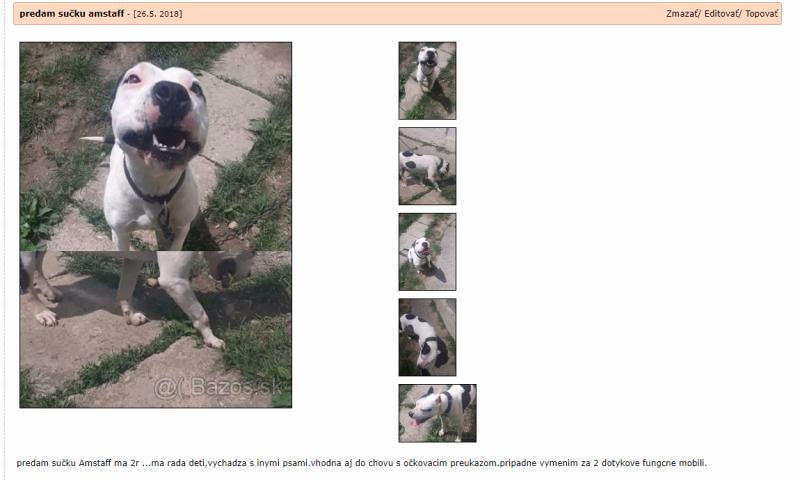 screencapture-zvierata-bazos-sk-inzerat-86260636-predam-sucku-amstaff-php-2018-06-15-20_43_17.png