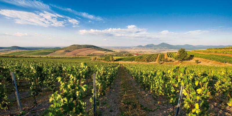 Tokaj-vinohradnicka-oblast.jpg