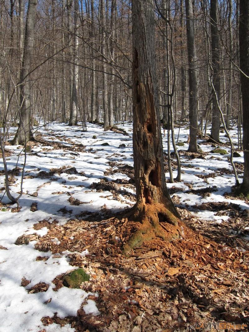 Strom v lese.jpg