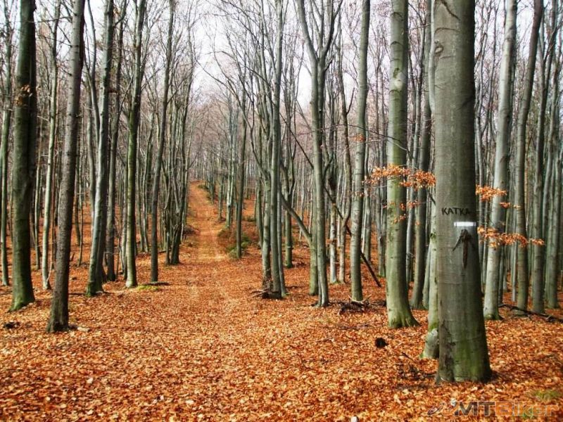 CV_kobylia-hora_pod-vrcholom-na ceste-od-sedla-podkova_2012nov-.jpg
