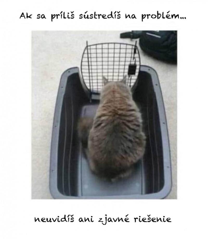 Mačka v klietke.jpg