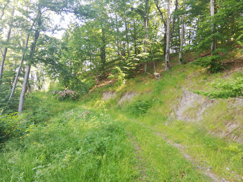 cesta_okolo_zvernika_vstup_do_lesa.jpg