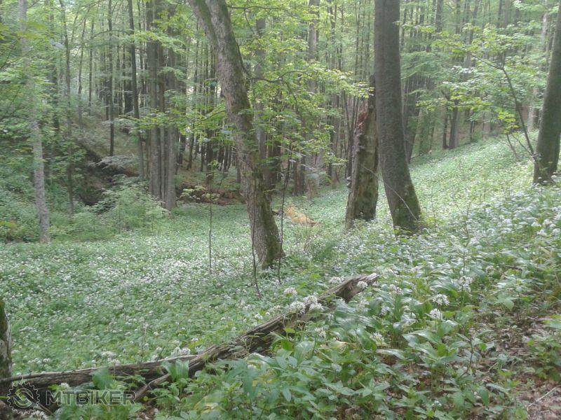 Cesnaková plantáž.jpg