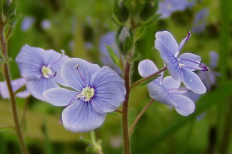 Kvet1.jpg
